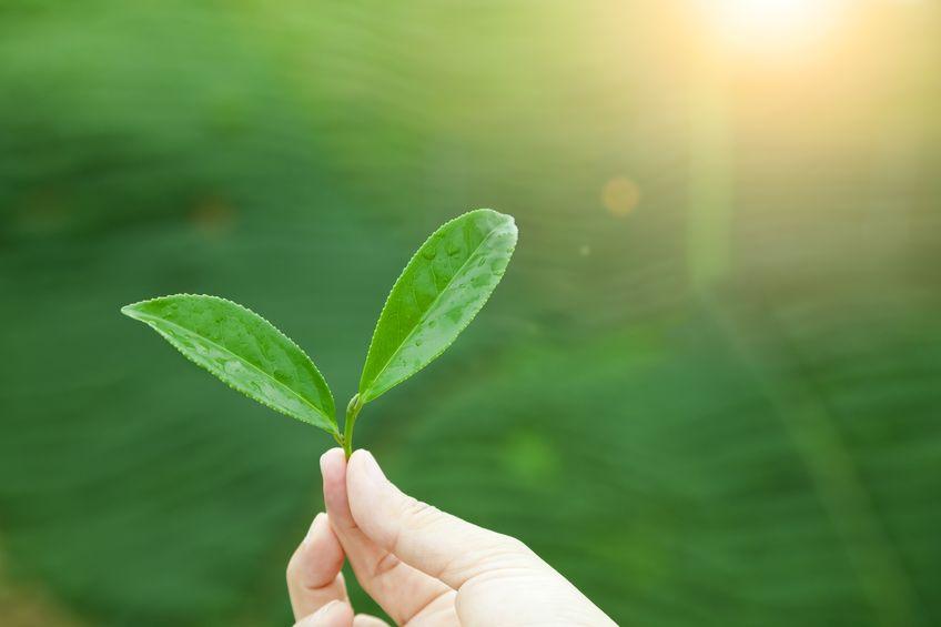 Podem os humanos ter a energia do sol diretamente como plantas?