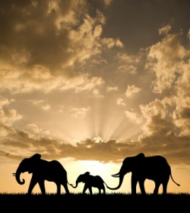Três elefantes