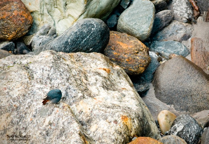 The blue pebble from the banks of Madmaheshwar Ganga