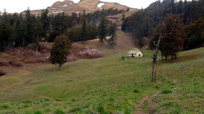 Dhel Thatch campsite in the Great Himalayan National Park, flush with the mauve of flowering dwarf rhododendrons