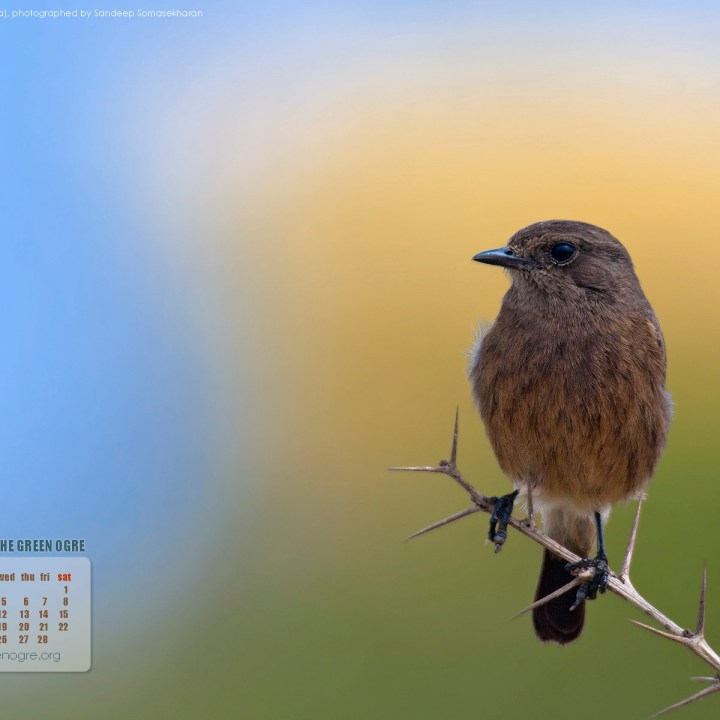 Download the February wallpaper calendar for desktops - 1920 px
