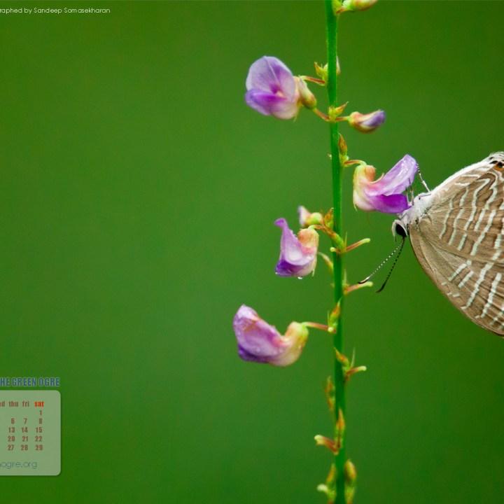 Download the March Wallpaper for your desktop/laptop 1920x1200 pixels