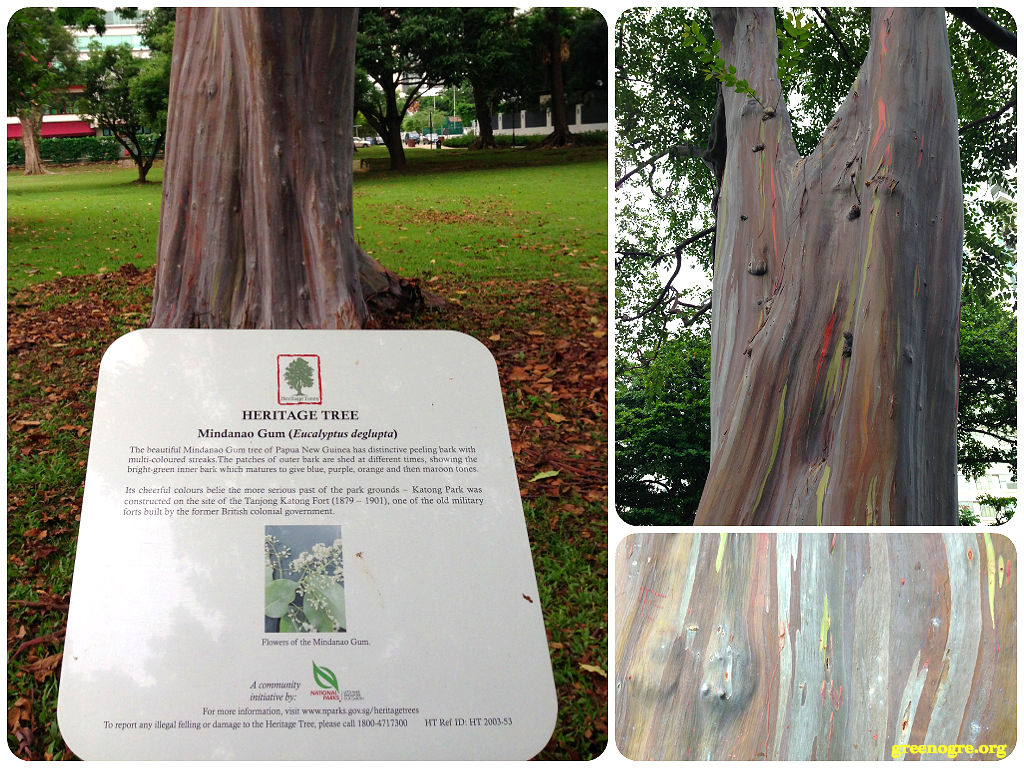 trees archives the green ogre in rainbows the mindanao gum tree