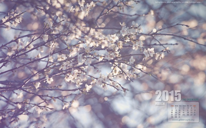 Download Spring for your laptop screen
