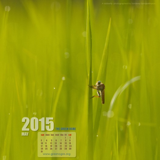 May is here. Kill some time with this Assassin Fly. Download the wallpaper