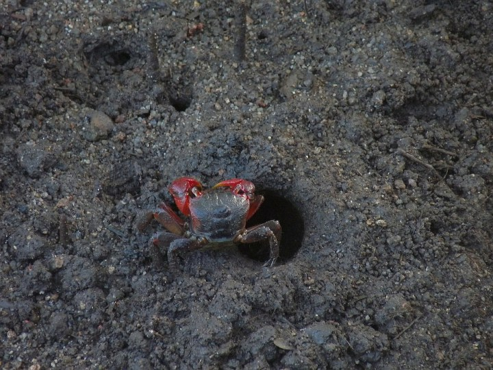 Crabs rule this empire of squelching mud