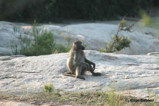 Simply sitting - contemplation?