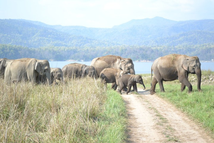 Elephants crossing the jeep track