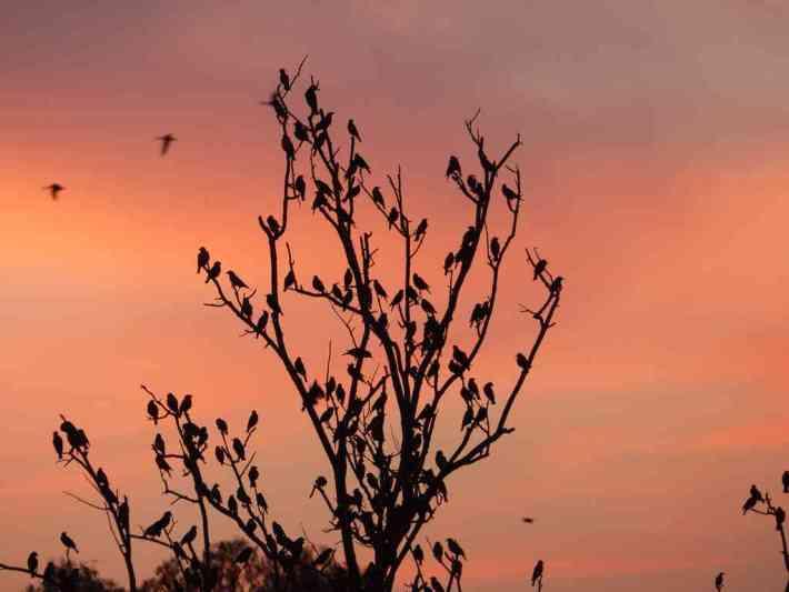 Winter Isnt Over Till Its Over >> Winter Birding It Isn T Over Till It S Over