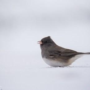 Winter birding at the doorstep