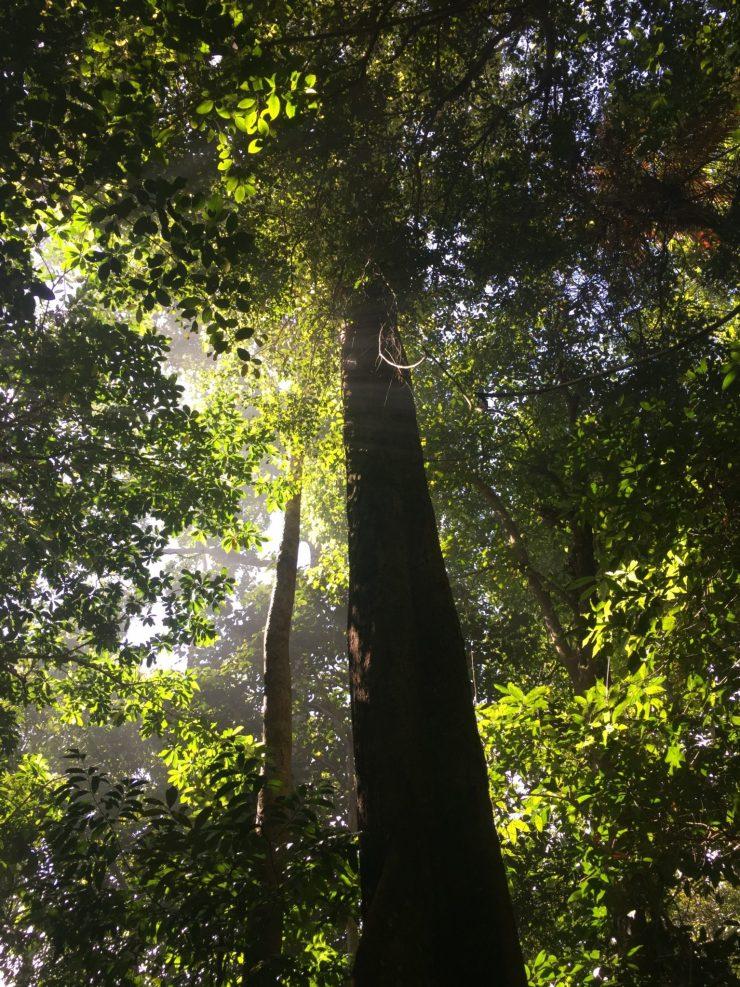 Bako National Park in Sarawak, East Malaysia, Borneo