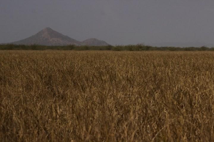 Kutch Banni Grasslands