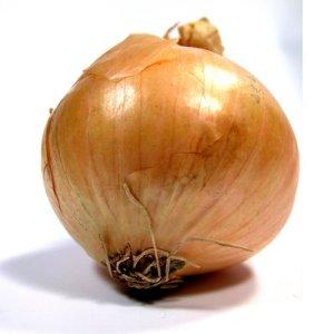 Common onion - Allium cepa