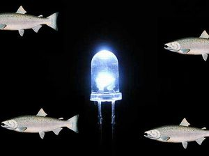 salmon-dna-led-bulb_IyYqc_69