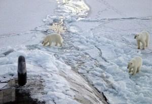 lloyds-of-london-arctic-report-1-537x368