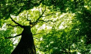 vovan_Forest_Shutterstock