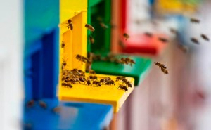Bee-Hives-August-2010