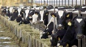 cows-produce-404_685716c