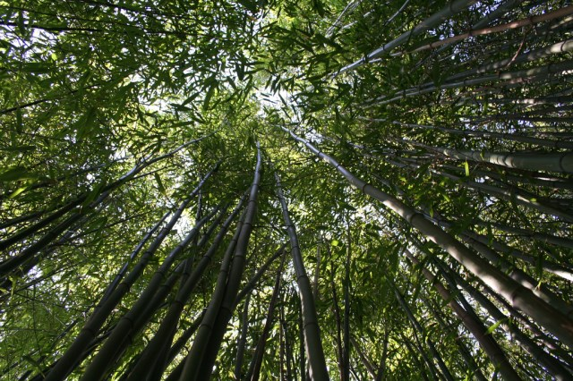 Renewable Bamboo Could Improve Vehicle Fuel Economy