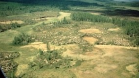 Naturally-Occurring Deforestation from the Tunguska Event, Barren to this Day.
