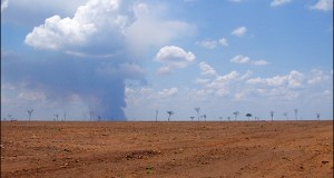 huge expanses of rainforest cleared by industrial soybean producers, Brazil
