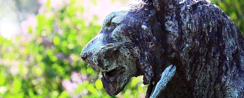 Green Parrot Gardens | Our Heritage | Lion