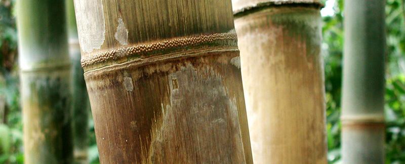 Green Parrot Gardens | Low Maintenance Gardens | Bamboo Garden