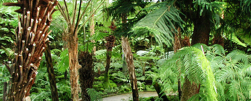 Green Parrot Gardens | Idea Development | Tree Ferns in a Woodland Garden near Menton, French Riviera