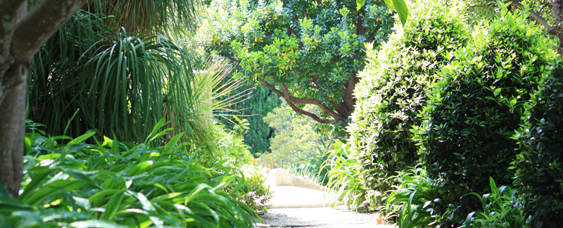 Green Parrot Gardens | Idea Development | Lush Planting Scheme in a Garden near Cannes, French Riviera