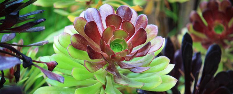 Green Parrot Gardens   Successful Planning   Rock Garden Scheme near St Tropez
