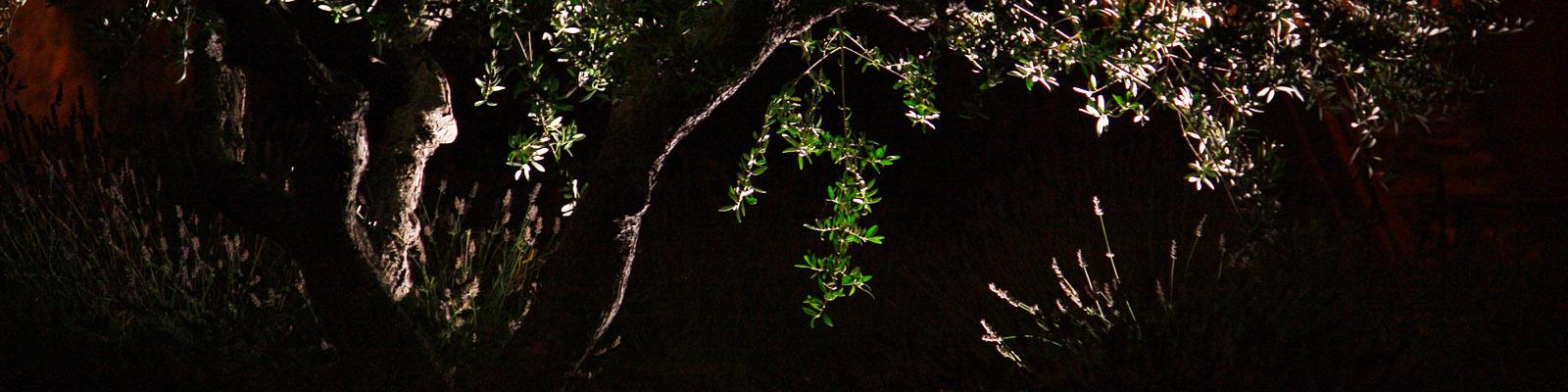 Green Parrot Gardens | Garden Lighting