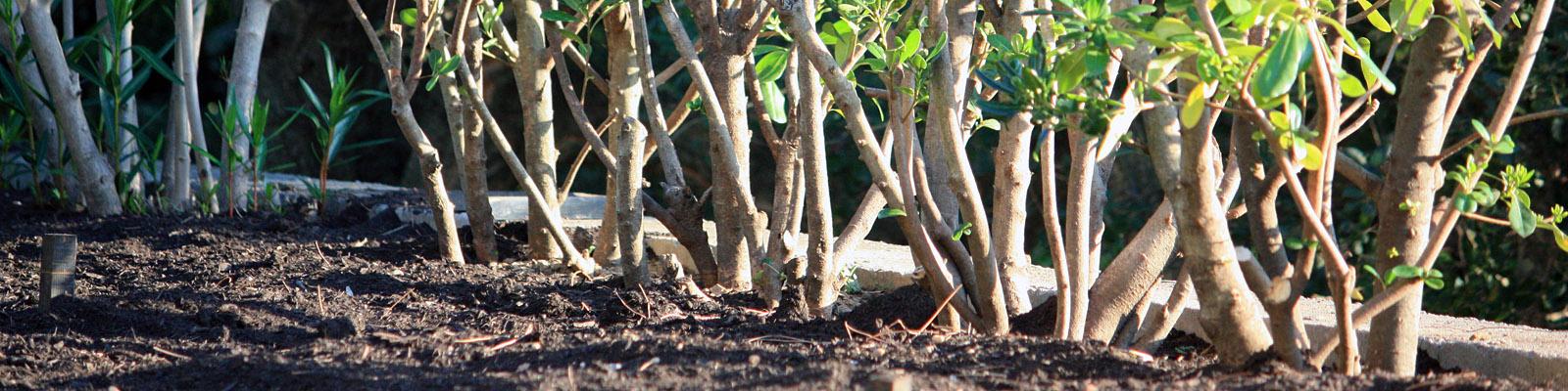 Green Parrot Gardens | Garden Renovation