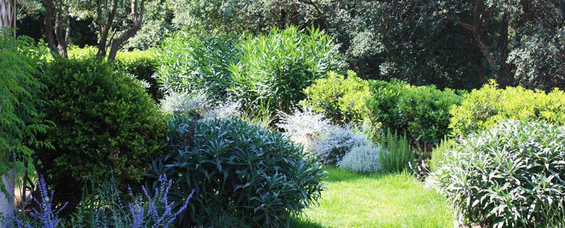 Green Parrot Gardens | Our Profile | Classic yet Lush Mediterranean Garden near St Tropez