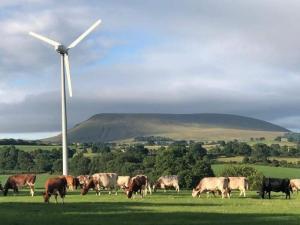 Organic Pasture Raised Cows in Pendle