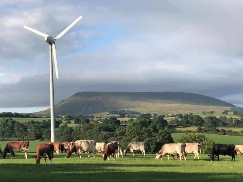 Our grass-fed beef comes from organic cows which roam freely on the grassy hills of Pendle
