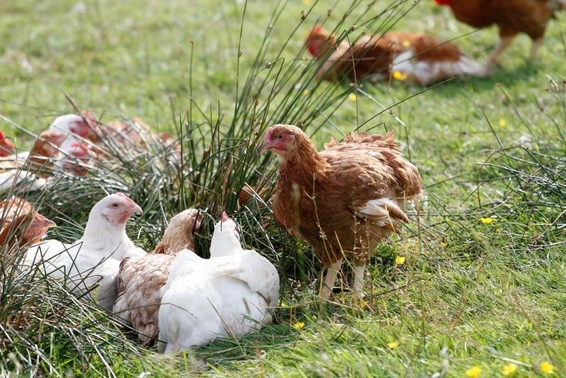 Health Benefits of Pasture Raised Meat