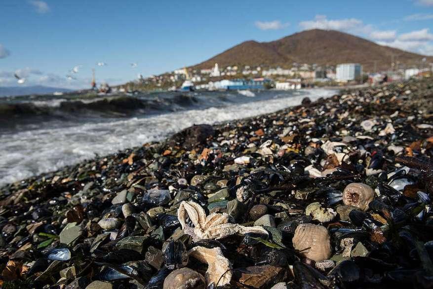 Исследование на Камчатке: трупы животных на пляжах.  © Дмитрий Шаромов / Гринпис