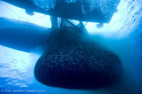 Image result for empty ocean