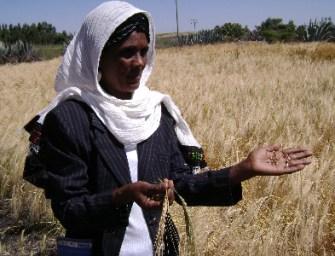 Ethiopian Seed Diversity