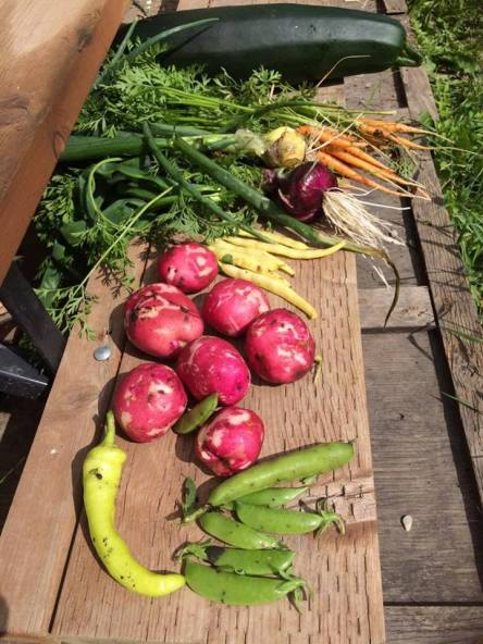 Locally-grown organic produce (Peter Harvey)