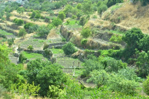 Ancient stone terraces of Battir (David Kattenburg)