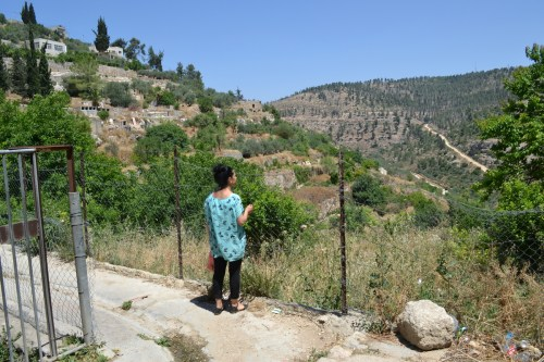 Battir gardens on the left; pine-covered, Israel-controlled hillside in distance (David Kattenburg)