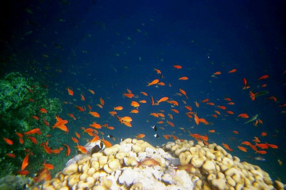 Pollution no fish left for Red sea fish