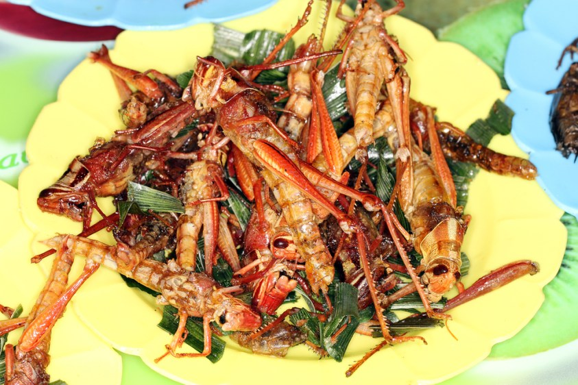Locusts - Edible bugs in Thailand | Ummi Goes Where?