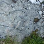 Sentiero 6 - Ritrovamenti Ammonitici...