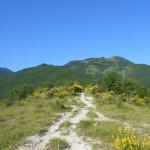 Sentiero 6 - Cresta di Coldipeccio