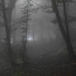 Sentiero 8 - Salita nella nebbia