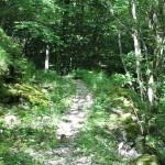 Sentiero 31 - Vecchia mulattiera