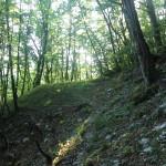 Sentiero 233 - Sentiero per Costa Fosso Lupo