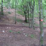 Sentiero 227 - Nuovi segnavia su alberi